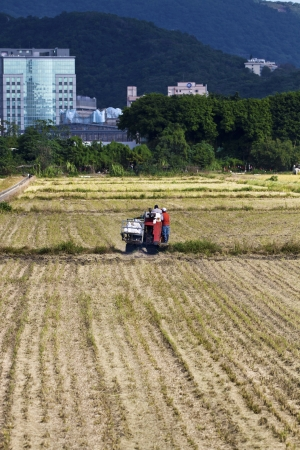 Farmer is working in rice farm with working machine, Taiwan Stock Photo - 17100672