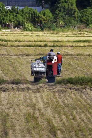 Farmer is working in rice farm with working machine, Taiwan Stock Photo - 17100280