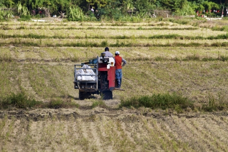 Farmer is working in rice farm with working machine, Taiwan Stock Photo - 17100775