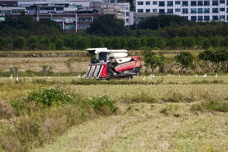 Farmer is working in rice farm with working machine, Taiwan Stock Photo - 17100130