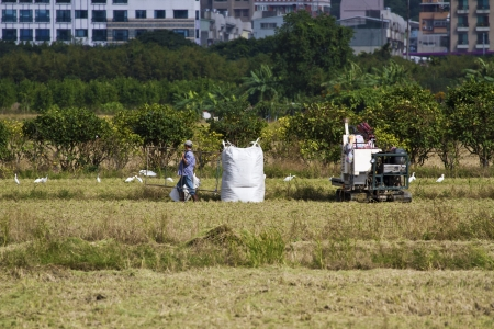 Farmer is working in rice farm with working machine, Taiwan Stock Photo - 17100424