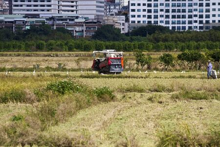 Farmer is working in rice farm with working machine, Taiwan Stock Photo - 17100262