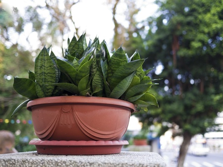 potted plant on wall Stock Photo - 17413260