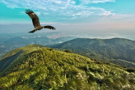 Black kite free flight in blue cloudy sky above mountains,Milvus migrans Фото со стока
