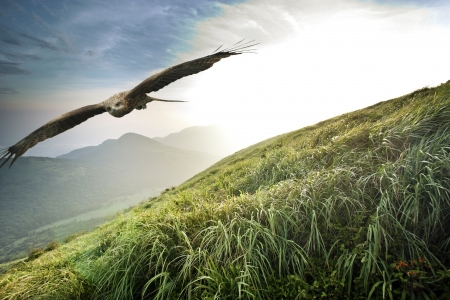 Black kite free flight in blue cloudy sky above mountains,Milvus migrans Imagens
