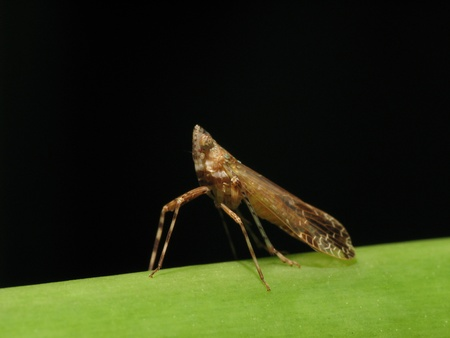 hopper with white light on leaf in forest