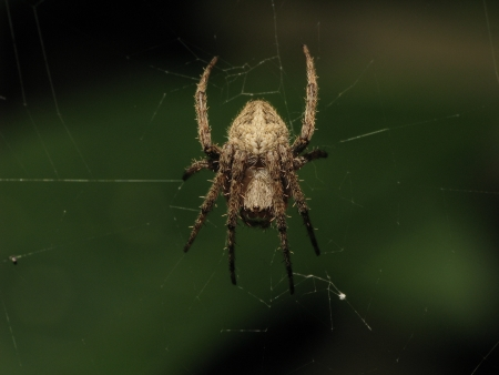 spider with cobweb in natural habitat photo