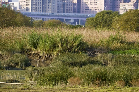 scenery of natural wilderness in Taipei,wetland and swamp photo