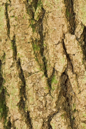 Abstract background of old rustic stripped boards photo