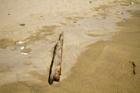foreshore: wooden stick on the foreshore