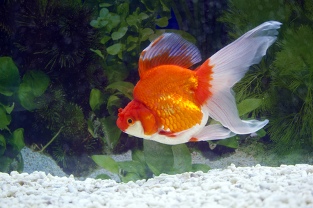 close view of Gold fish Imagens
