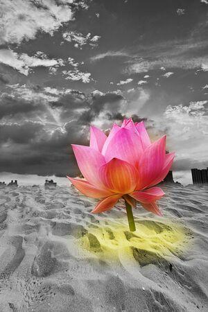single blooming lotus in cracked desert landscape Stock Photo