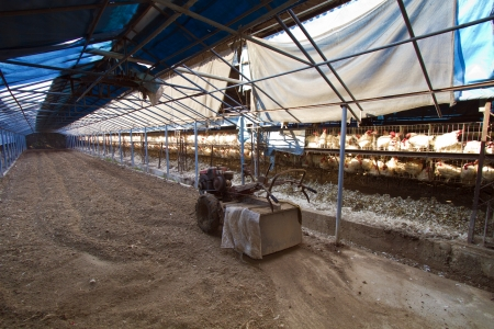 soil tractor in a chicken farm indoor Stock Photo - 24554601