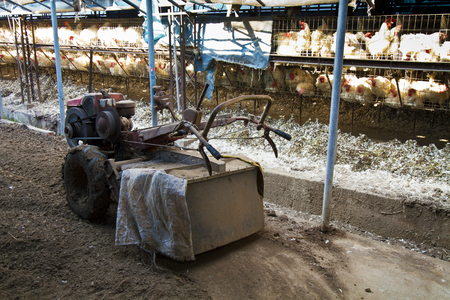 soil tractor in a chicken farm indoor Stock Photo - 24563125