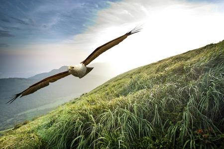 eagle fly through mountain against sunlight Stockfoto