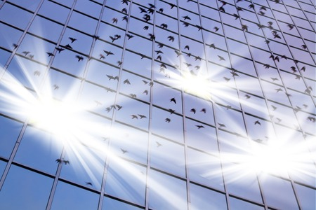 reflect: birds in flight reflect on blue building glass with bright white light,open the secret of life