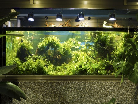 Aquascaping of the beautiful planted tropical freshwater aquarium Reklamní fotografie