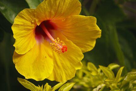Brilliant or San Diego yellow Stock Photo - 8588547