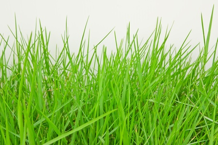 The grass on the pitch. Archivio Fotografico