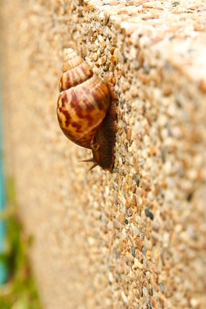 Snails in the garden behind the house. photo