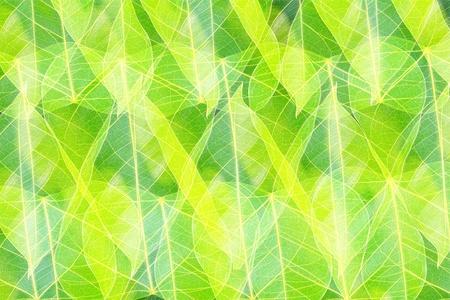 leaf tattern photo