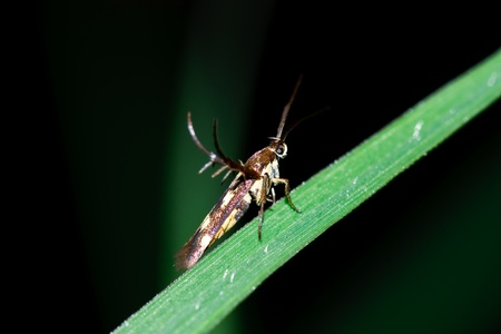 Insect macro on grass,thailand photo