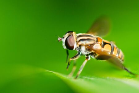 Fly on the grass. Stock Photo - 10044826