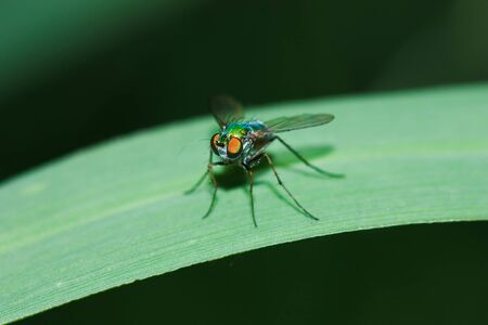 insect fly macro on grass Stock Photo - 10179819