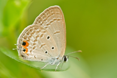 butterfly on leaf Stock Photo - 10256354