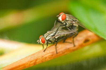 Fly on the grass. Stock Photo - 10256341