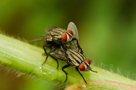 wet flies: Fly on the grass. Stock Photo