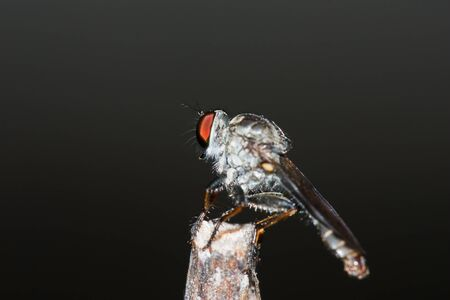 Fly on the grass. Stock Photo - 10265373