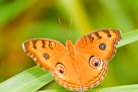 butterfly on leaf Stock Photo - 10265410