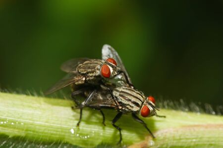Fly on the grass. Stock Photo - 10285768