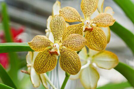 Thai orchid Stock Photo - 10285798