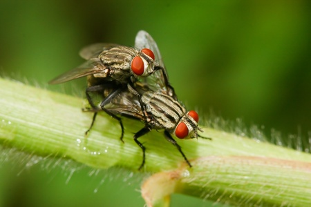 Fly on the grass. Stock Photo - 10328137