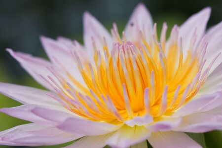 Lotus macro shooting. Stock Photo - 10449471