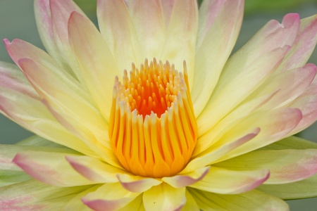 Lotus macro shooting. photo