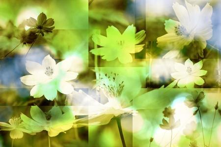flower  texture background