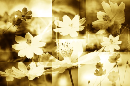 flower  texture background  photo