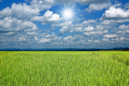 green field and sun sky  Archivio Fotografico