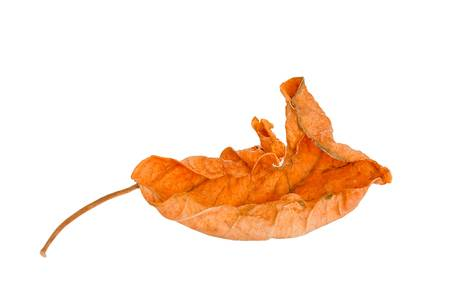 Leaves on a white background. photo