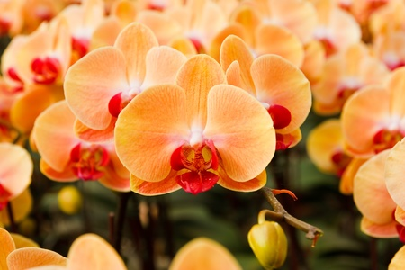 orchid in the garden at thailand photo