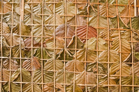 leaf wall texture is natural wall Stock Photo - 11953691