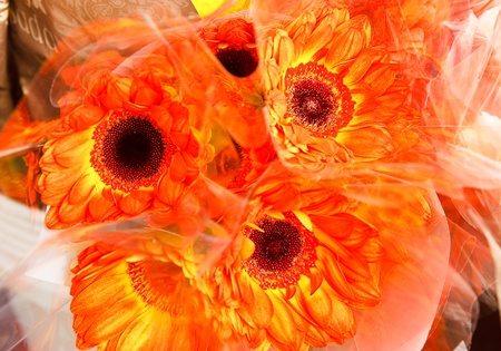 pot marigold: Orange pot marigold