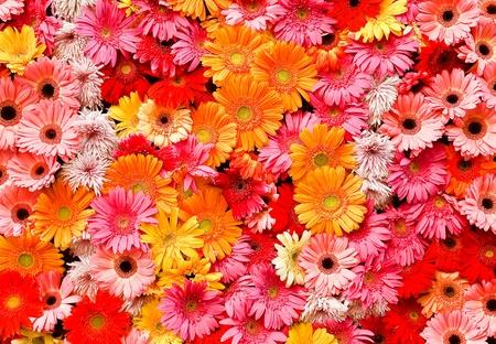 ringelblumen: Ringelblumen