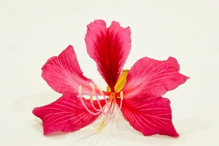 Red flowers Thai. photo