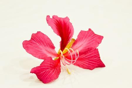 Red flowers Thai.