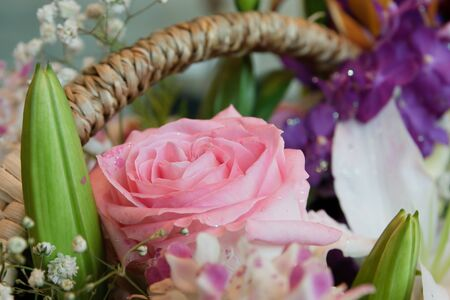 blossom pink roses photo