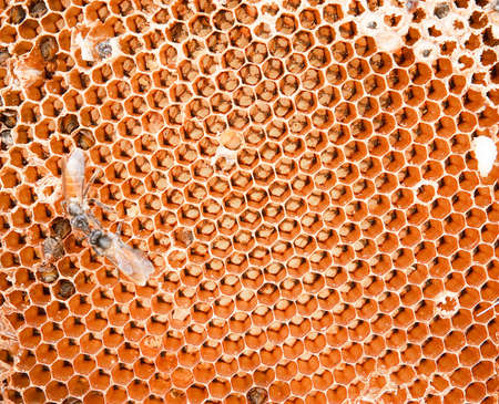 honey comb and a bee working Stock Photo - 12413648